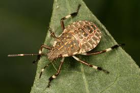 true bugs what u0027s bugging you
