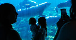 seaworld black friday deals seaworld stake long held by blackstone is sold to chinese firm
