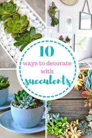 49 best succulents images on pinterest succulent plants