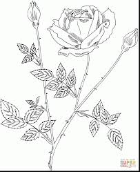 remarkable rose bush coloring pages with coloring pages of roses