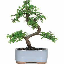 live plants u0026 goods walmart com