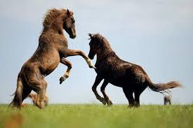 Mis amores los caballos Images?q=tbn:ANd9GcRlBRLXpkk4yrv2goycyuL2oIAa93OX0Vaqdbk5Afb0OYIc-y7uNA