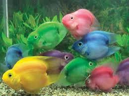 موسوعة أسماك الزينة