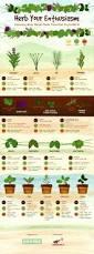 270 best u0027erbs images on pinterest indoor herbs herb gardening