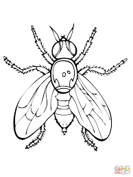 fly coloring page drosophila fruit fly coloring page free