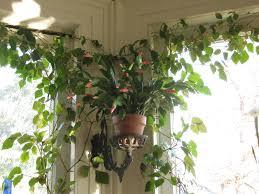 stunning indoor plants design ideas gallery design and
