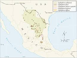 Sierra Madre Occidental Map Lophophora Geographic Distribution Of Peyote Lophophora
