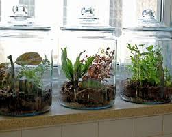 home decor winning shelf window herb kitchen garden basil