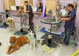 how much does dog grooming cost angie u0027s list