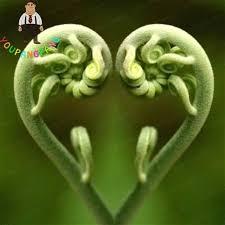 aliexpress com buy tohum edible fern vegetable seeds rare love