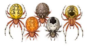 Halloween Usa Columbus Ohio Halloween Spider Spidersrule