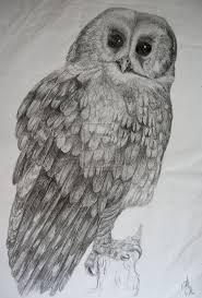 367 best owl sketches images on pinterest owls sketching and