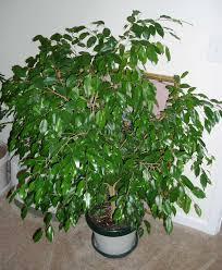 Kućne biljke-čistaći životne oaze Images?q=tbn:ANd9GcRpawjNdAAkwNxFLGhiQn8oiLhywCv_7Cc0Ce_qQv-RR4r3K9A&t=1&usg=__Mypgvl8OdzMupu-jRrt2-g1j_00=