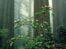 الطبيعة الخلابة images?q=tbn:ANd9GcR