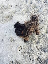 buy a affenpinscher dog walks favourite products curious george u0026 me