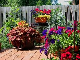 11 most essential container garden design tips designing a