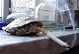 لاكپشت هاي عجيب