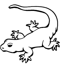 animal gecko coloring pages animal coloring pages of