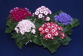 الزهور ونباتات الزينة, Images?q=tbn:ANd9GcRtvnsyBNdtnvxlnq3QCjZ8aiK-SNOcB15vPTZPrsxqUeLdZdpLlw