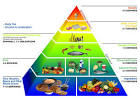 Okinawa Diet Food Pyramid