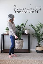houseplants for beginners how to keep houseplants alive
