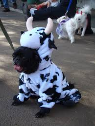 adorable dogs in halloween costumes 1
