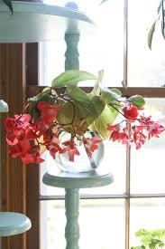 41 best water gardening images on pinterest gardening indoor