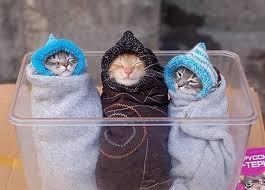 حبايبي القطط Images?q=tbn:ANd9GcRw06JDmF6-XA53lxzbHDk61uLc9DO9EnejvxuVNcy8zyJ_a4OV