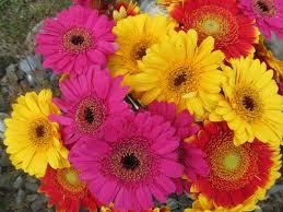 Flowers Plants by Flower Bouquet Blooms Flowers Plants Floral Gerberas Desktop
