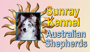 australian shepherd queen creek az sunray kennel website excellent pets and companions