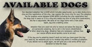 3 australian shepherd mix puppies for adoption untitled document