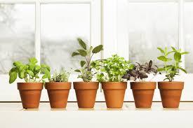indoor herb garden ideas how to make a kitchen herb garden