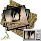قران كريم للمسن,صور ايات قرانية للماسنجر,صور القران الكريم جديدة images?q=tbn:ANd9GcR