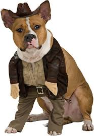 Dog Costumes Halloween 116 Holiday Images Costumes Halloween Ideas