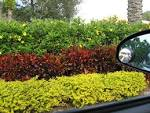 Hedge Plans for our Front Yard | Danielles Garden Blog
