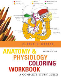 Anatomy And Physiology Chapter 1 Review Answers Marieb Anatomy U0026 Physiology Coloring Workbook A Complete Study Guide