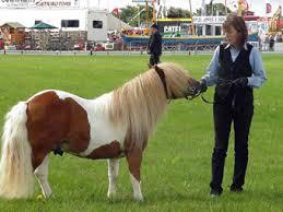 Mis amores los caballos Images?q=tbn:ANd9GcS--t854nUOR_GOFldb4OaabpaTDXFz_4mzJWCtxm-69UsCHeQ&t=1&usg=__IvngqJJpviJ4vwACT_MqlSJ-KYM=
