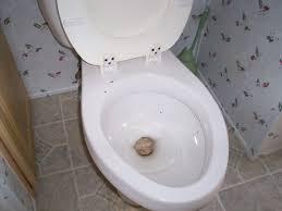 one tip every u0027snowbird u0027 should know plastic wrap your toilet