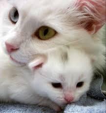 صور قطط تدحك,صور قطط,صور قطط جميلة,صور قطط حلوه Images?q=tbn:ANd9GcS2QzinGTKvXC4fndwlDWqmFsUTg11Ux6sttwyJ2OvEjhVVoZdm