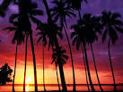 Sunset Spectacular Puerto Rico palm tree trees