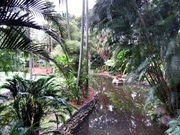 Brisbane City Botanic Gardens by Botanical Gardens In The Winter U002706 Mapio Net