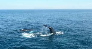 hook line and sinker one world one ocean