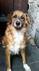 Cães resgatados precisam de doações de ração em Contagem (MG ...