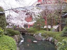 الساكورا اليابانية,أنيدرا
