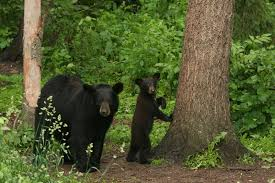 news wildlife genomics u0026 disease ecology wildlife genomics