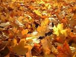 Wallpapers Backgrounds - love autumn skinny myspace graphic (pictures Autumn love lonely leaves skinny myspace graphic layoutsparks 1024x768)