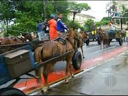 Apesar de lei proibir, Prefeitura de Campos (RJ) libera tração animal