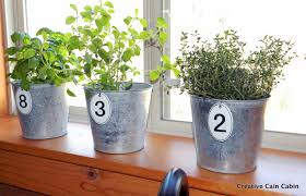 windows windowsill herbs designs how to plant a windowsill herb