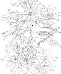 free printable coloring page washington state bird and flower