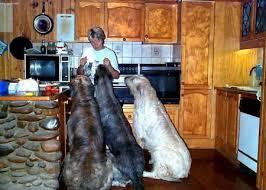 كلاب أمريكا ، وفقراء العالم Images?q=tbn:ANd9GcS7YSRmk4CXD-E2kNa0fytGghCkQFlUm_HPOb7GU32Pdd89JYZ0KQ